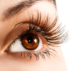 How To Make Your Eyelashes Grow - Home